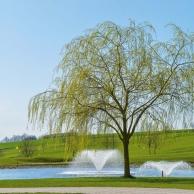 Bella Vista Golfpark - Teich Frühling Baum